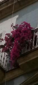 Balcones II